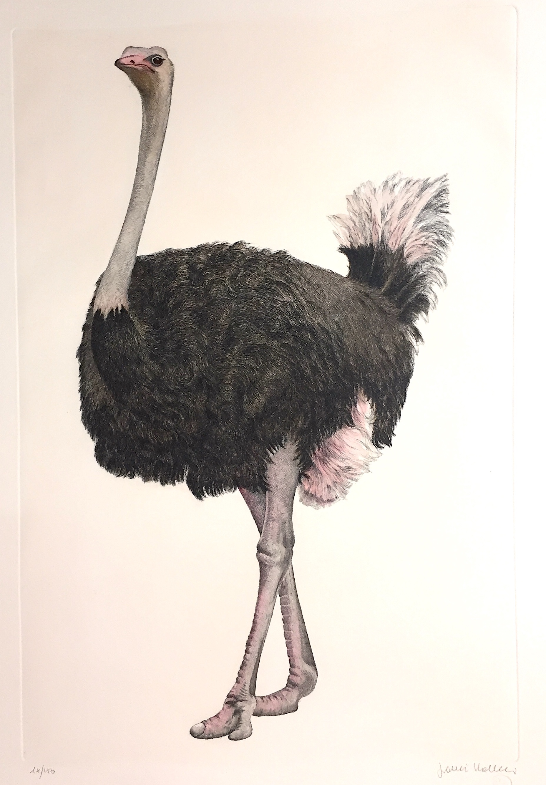 ritocc___art_728_a_the_ostrich_measure_image_30_x_50_cm_measure_papaer_50_x_70___