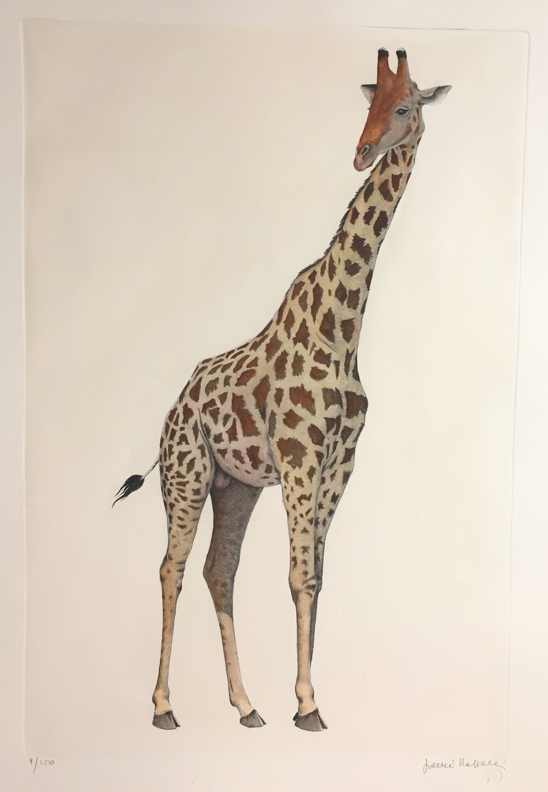 ritocc_art_728_b_the_giraffe_-_measure_image_30_x_50_measure_pap_50_x_70
